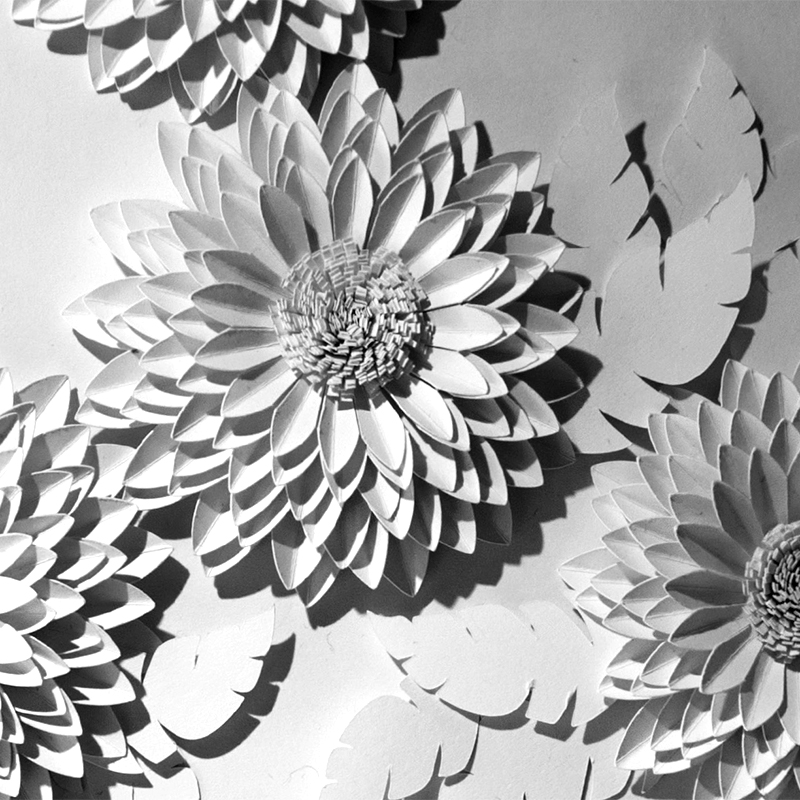 Mozart Chrysanthemum
